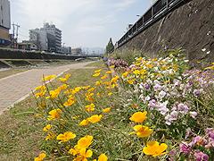 秦野 水無川 季節の花々