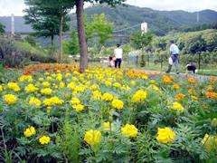 秦野 戸川公園